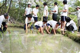 校地の棚田で田植えを行いました