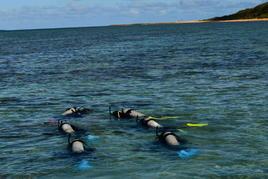 八重山諸島での研修報告