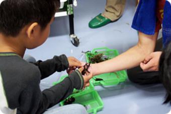 第1回奈良学塾「里山の森を育てるクラブ―入門編―」を行いました