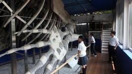 葛西臨海水族園(東京海洋大)で研修