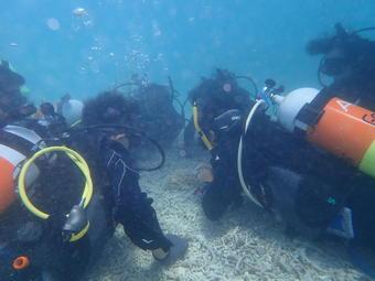 SS国内研修「八重山諸島のサンゴの現状と未来研修」を行ないました
