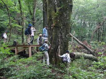 SS国内研修「森里海の連環―ブナ林とヒトの共生―研修」を行いました