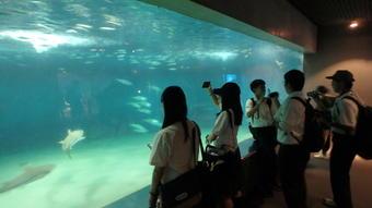 SS国内研修「海洋学(魚類から海底探査まで)まるごと研修」を行いました