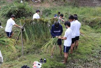 校内にある棚田で稲刈りを行いました