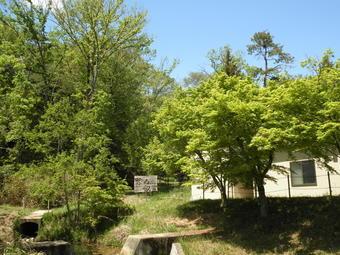 新緑の奈良学園